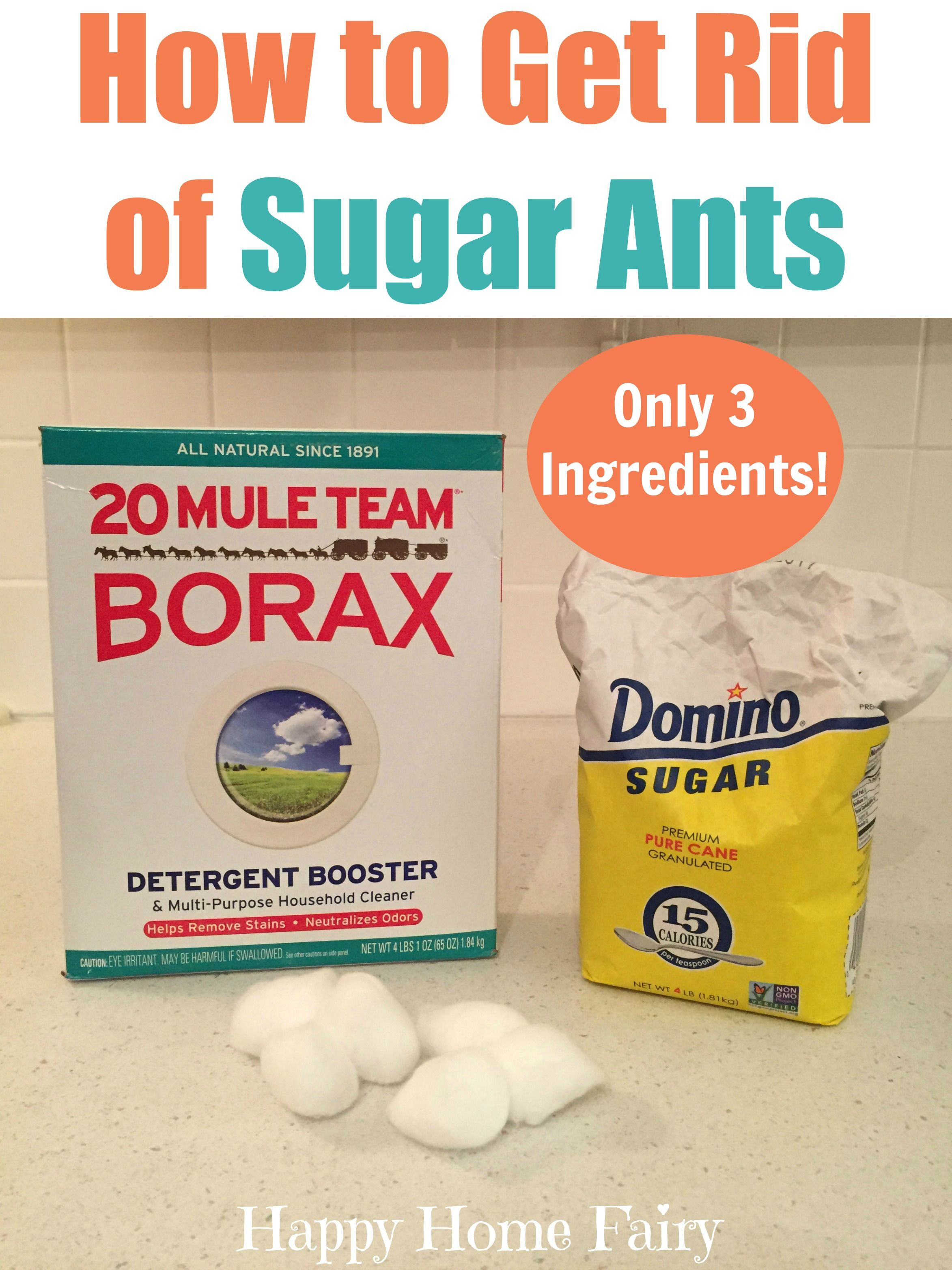 how can you get rid of sugar ants in your house - the best ant 2017